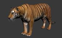 Tiger_onlymodel