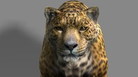 3d model of leopard cat