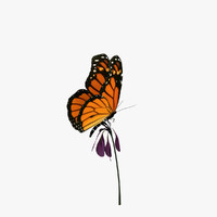 Animated Monarch Butterfly with Flower