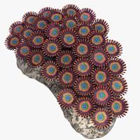 shazam zoanthus soft 3d max