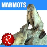 3d marmots model