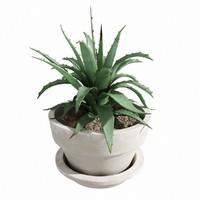 realistic aloe plant