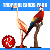 max tropical birds
