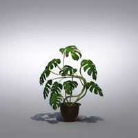 Philodendron Monstera Floor Plant