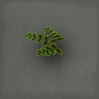 3d water leaves model