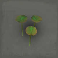3d waterlily water lily model