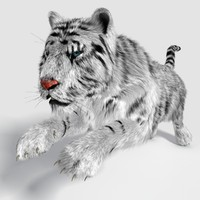 realistical tiger 3d 3ds