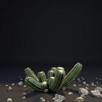Cactus I ( Cactaceae)