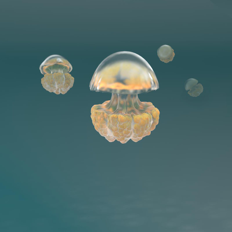 Jelly_fish_pers_02.jpg