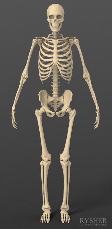 Skeleton_frontal view.jpg