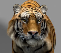 max tiger animation fur