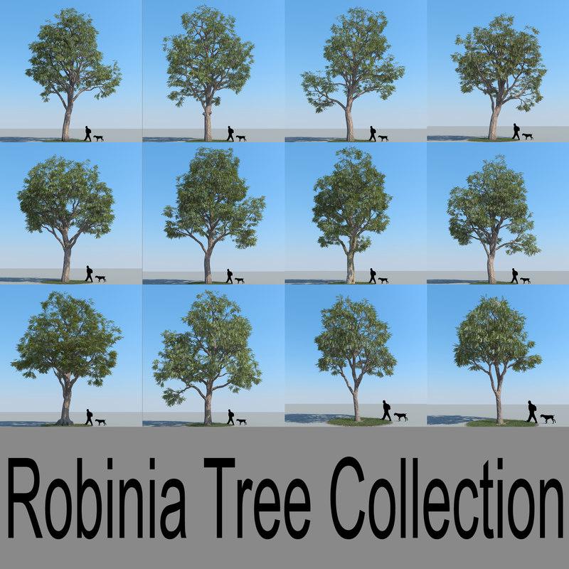 robinia_collection copy.jpg