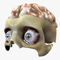 3d eye brain anatomy model