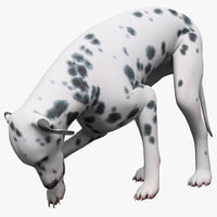 3d max dalmatian dog pose