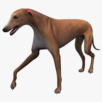 lightwave australian greyhound pose 2