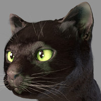 3d model head cat fur