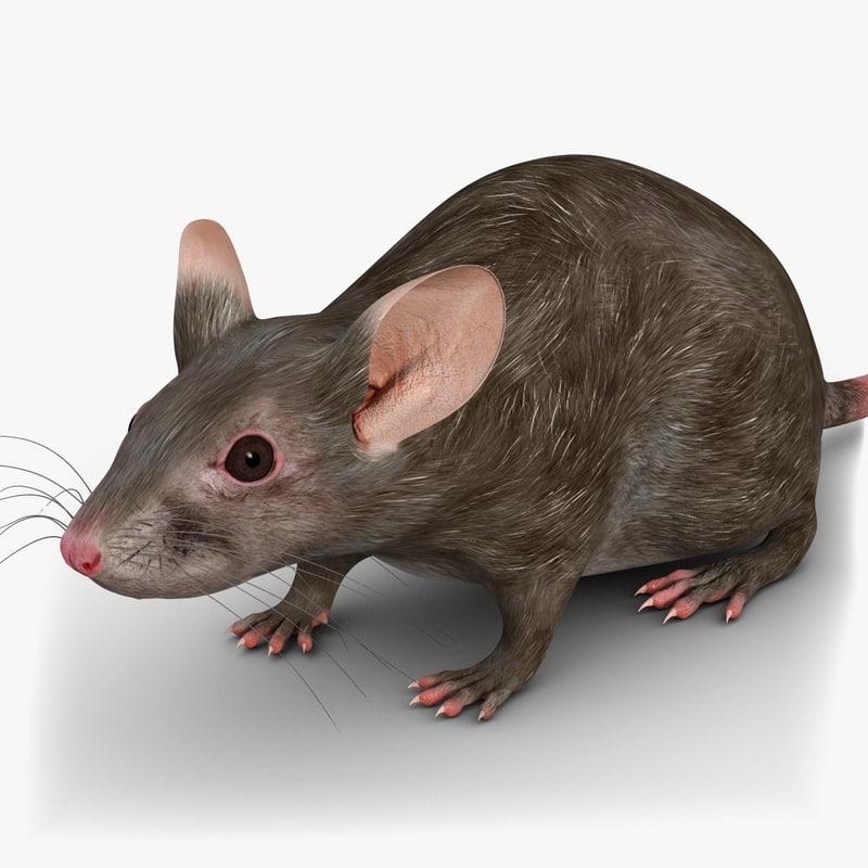 MouseGrey-2chk247.jpg