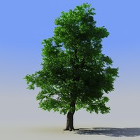 photorealistic tree max