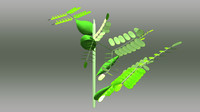 3d model acacia melanoxylon