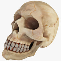 maya aquarium skull