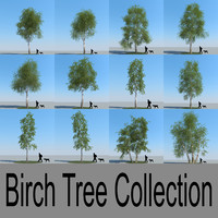3d realistic birch trees