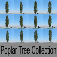 3d model realistic poplar trees