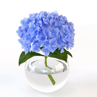 branch hydrangeas glass vase 3d model