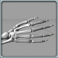 igs arm bones 3dm