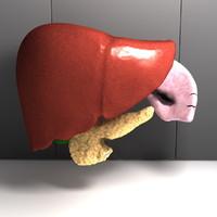 human organs liver spleen 3d model