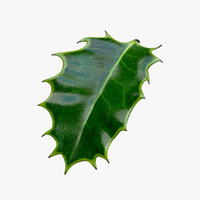 Holly Leaf B