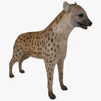 hyena animal modelled 3d model