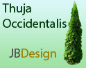 Thuja Occidentalis RPC - arborvitae - white cedar