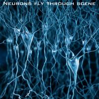 max pyramidal neurons