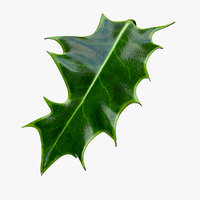 Holly Leaf A