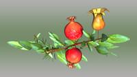 pomegranate 3d obj