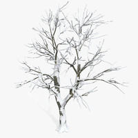 Snow Plain Defoliated Tree
