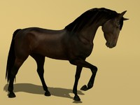 3d model horse animations