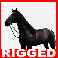 Black Horse (Rigged)