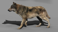 3d model of wolf dog