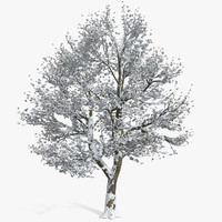 Snow Covered Winter Tree With Leaves