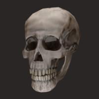 maya mandible skull