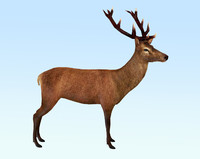 3d red deer stag