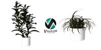 plants interior max