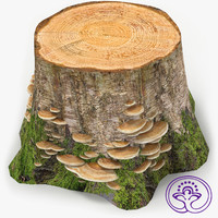 3d stump mushrooms