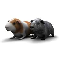 guinea pig 3ds