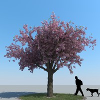 realistic cherry tree max
