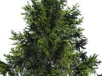 3d 2d tree