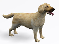 3d model of labrador retriever