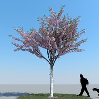 3d realistic cherry tree model