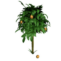orange tree 3d obj